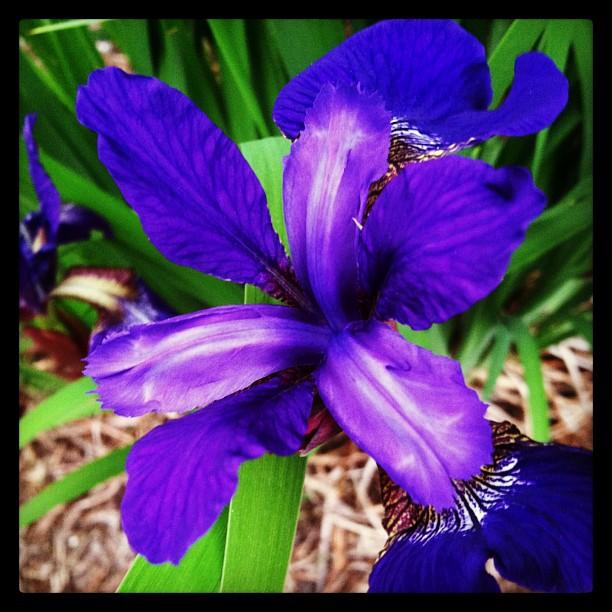 Iris 06-06-2013