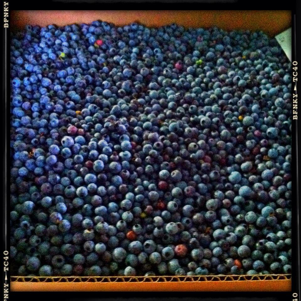 Blueberries 20 lbs 08-04-2013