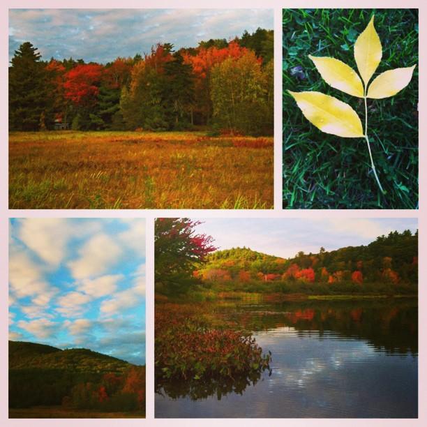 Autumn 10-05-2013