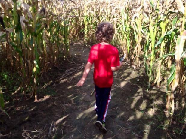 Corn Maze - Letter Size
