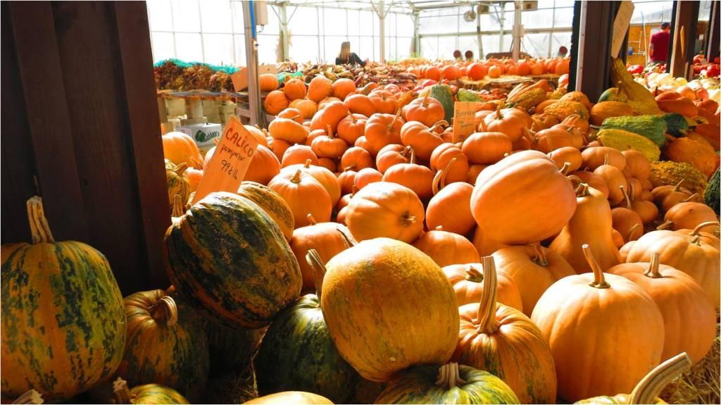Pumpkin Search - Letter Size