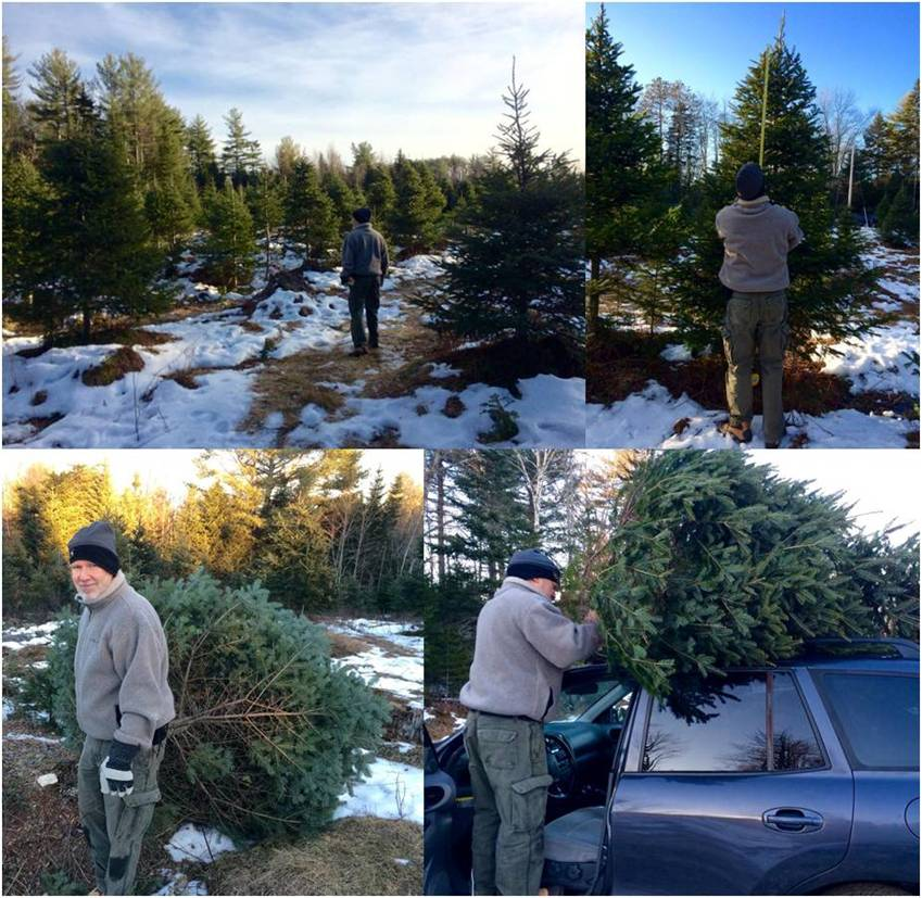 Christmas Tree search 2014 - Letter Size