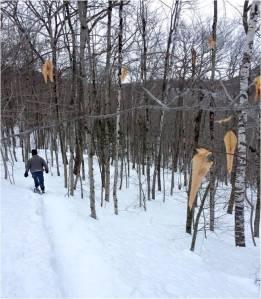Snowshoes 2015 - Letter Size