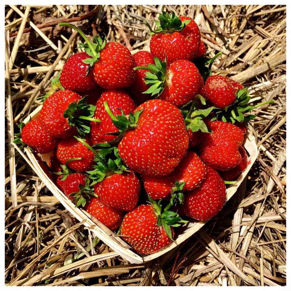 hopes-edge-strawberries-july-3rd-2016