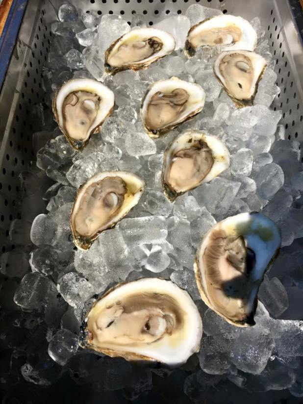 oysters-06-25-2016
